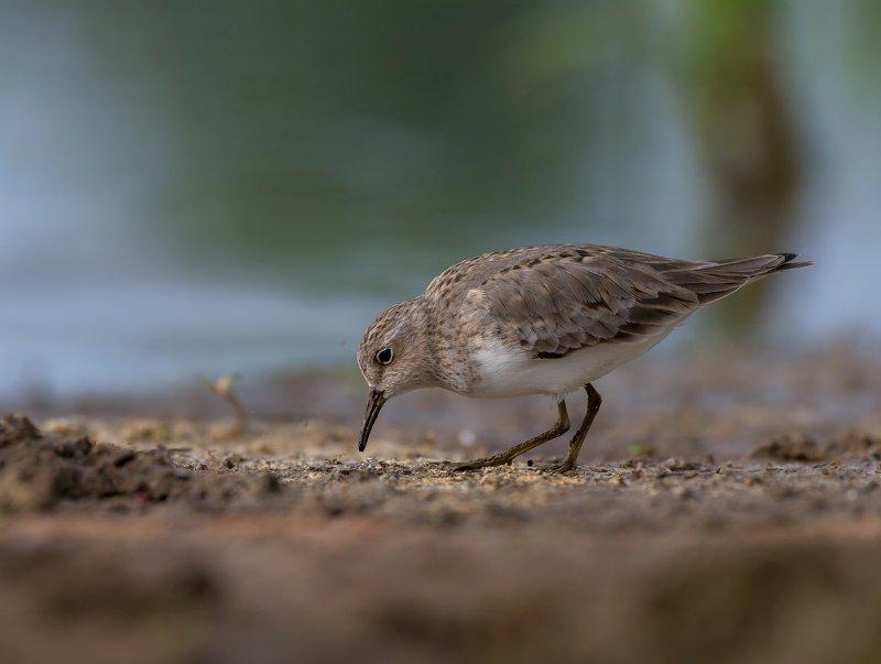 птицы,природа,весна На берегуphoto preview