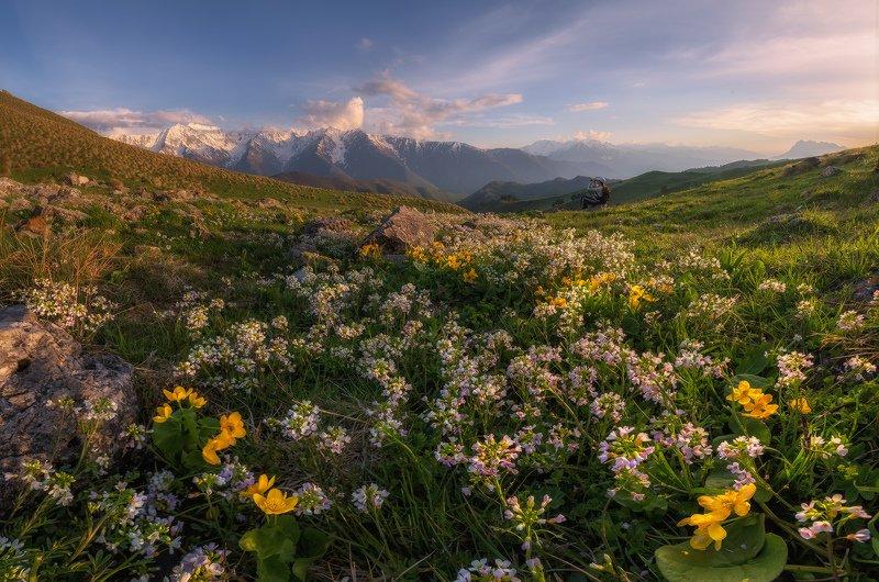 кавказ, ингушетия, эрзи, вечер, цветы Вечер на цветочной полянеphoto preview