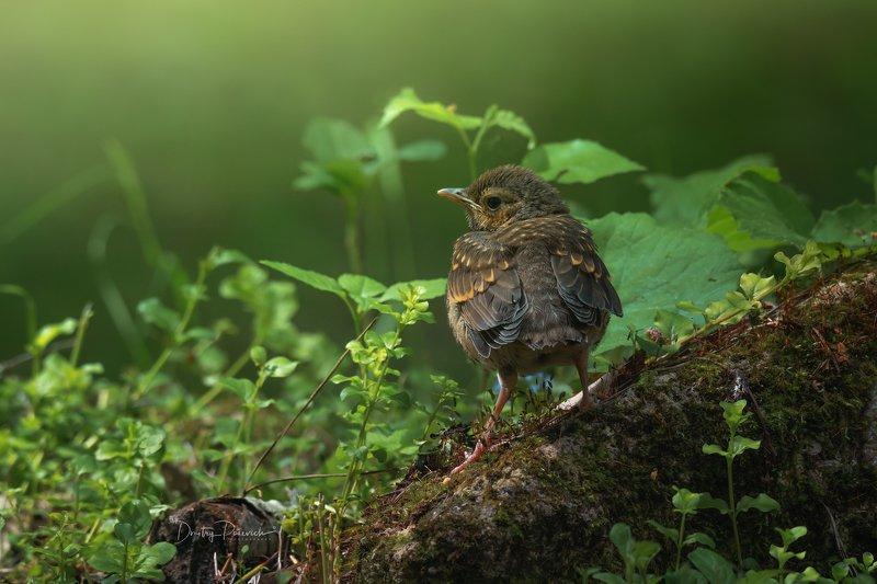 природа, лес, животные, птицы В ожидании фото превью