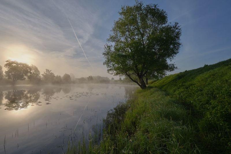 утро, рассвет, туман, свет Возле прудаphoto preview