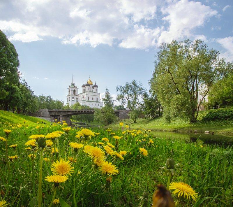 псков, россия, весна, одуванчики Одуванчикиphoto preview