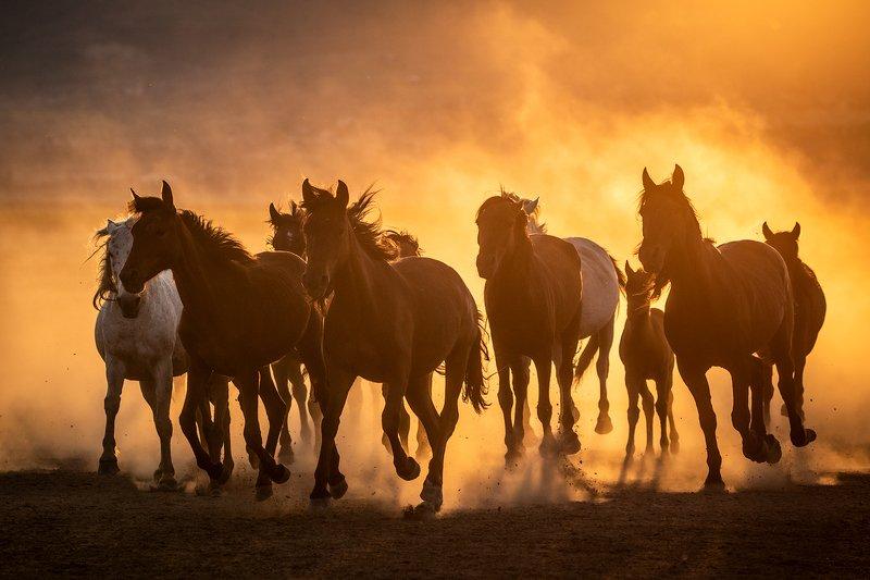 Cappadocia Horses фото превью