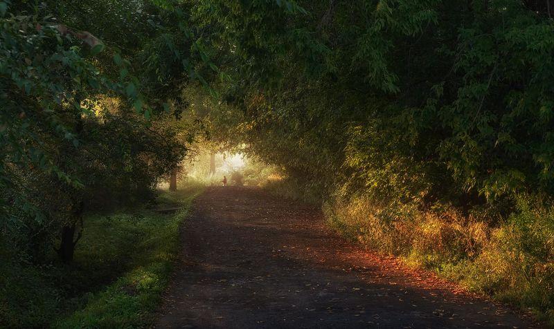 утро, осень, сентябрь, свет, дорога, приморский край, село осенним утромphoto preview