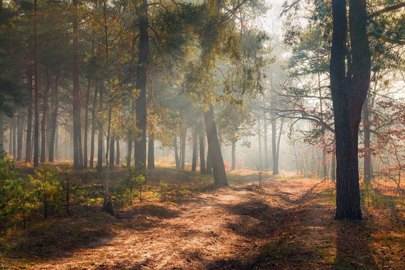 лес, осень, ноябрь, туман Всё залито светом рассветнымphoto preview