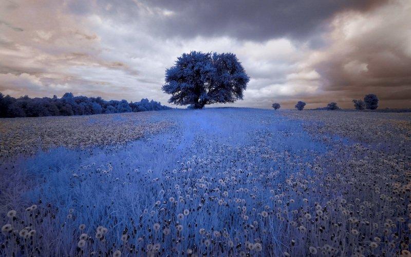 infrared,ик-фото,инфракрасное фото, инфракрасная фотография, пейзаж, весна Пасмурный день одуванчиков 1.photo preview
