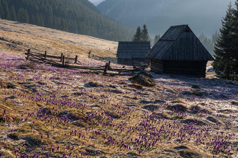 landscape,chocholowska, tatras,poland,mountains Chocholowska valleyphoto preview