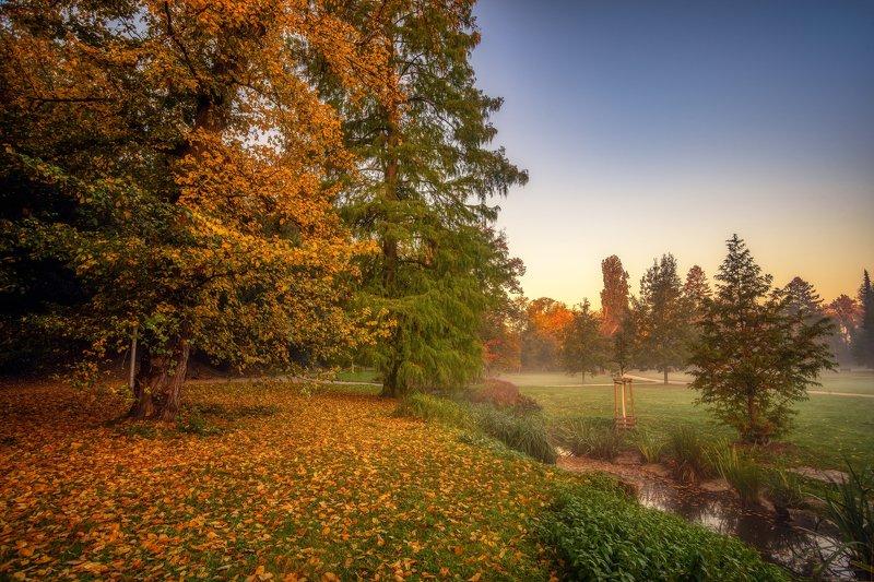 природа пейзаж вода туман утро рассвет осень небо солнце деревья отражения озеро парк photo preview