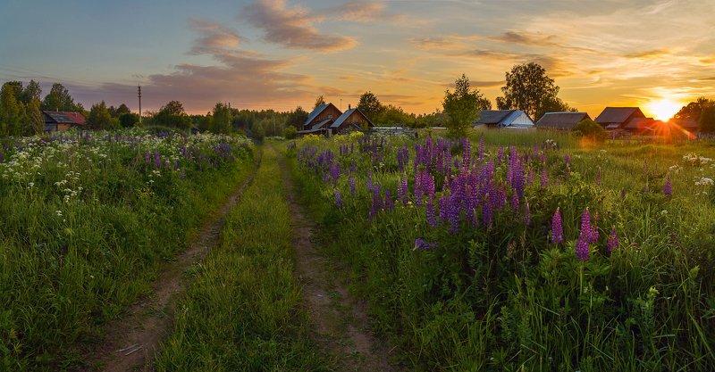 деревня вечер люпины дорога моя деревенька )photo preview