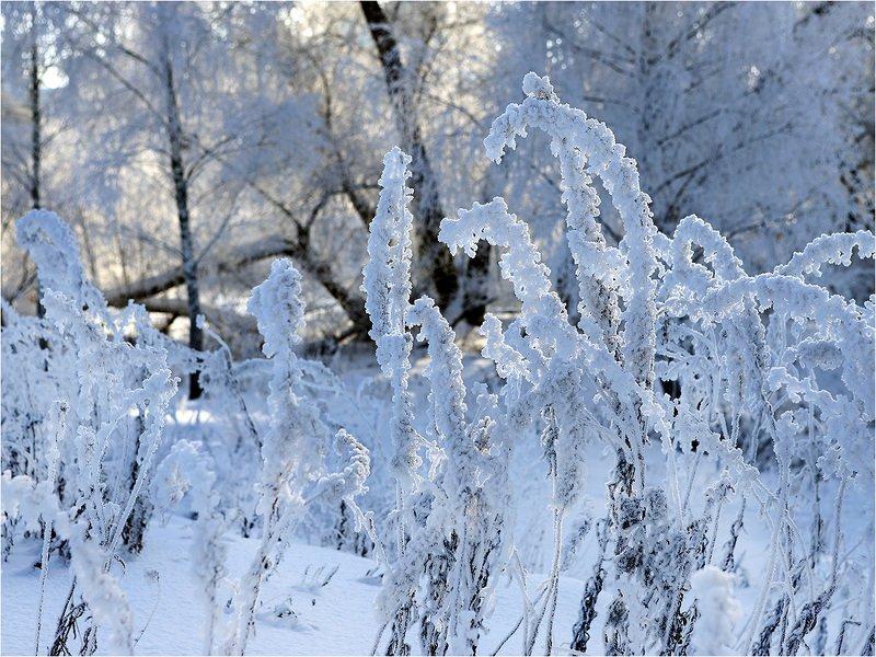 зима, утро, холод, снег, мороз, Холодный день.photo preview