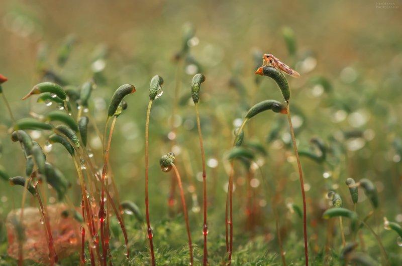 макро, природа, мох, насекомые, цикадка, macro, nature, moss, insects, Притворяясь мхомphoto preview