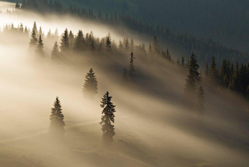 mountain, summer, landscape, travel, nature, romania, colors, rodnei, fog, sunrise, mist, light Golden fogphoto preview