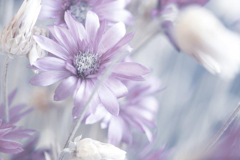макро цветы В воздушном стилеphoto preview