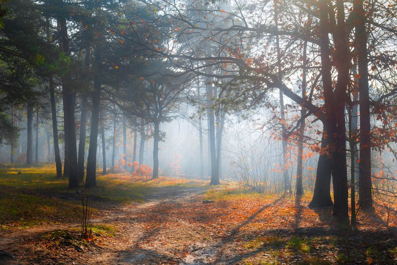 лес, осень, ноябрь, туман, рассвет, свет, лучи Всё залито светом единымphoto preview