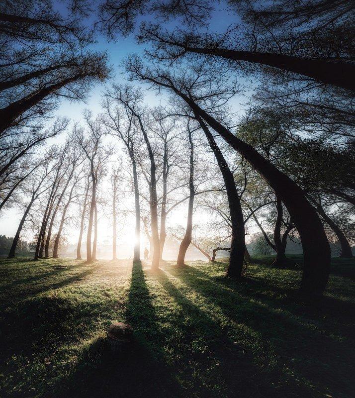 волшебство,деревья,жизнь, любовь, молчание, музыка, природа, река, свет, силуэт, солнце,тени, тетерев, тишина,украина,человек, коростышев \