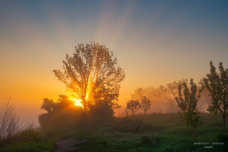 #landscape, #nature, #scenery, #forest, #wood, #autumn, #mist, #misty, #fog, #foggy, #river, #waterfall, #longexposure, #mountain, #vitosha, #bulgari, #aтуман, #лес, #oсень #горы ***photo preview