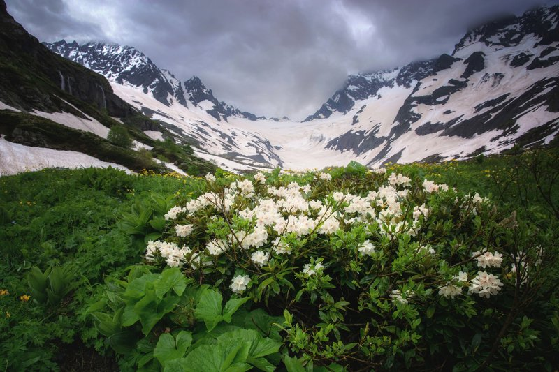 кавказ, горы,цветы Птышские рододендроныphoto preview