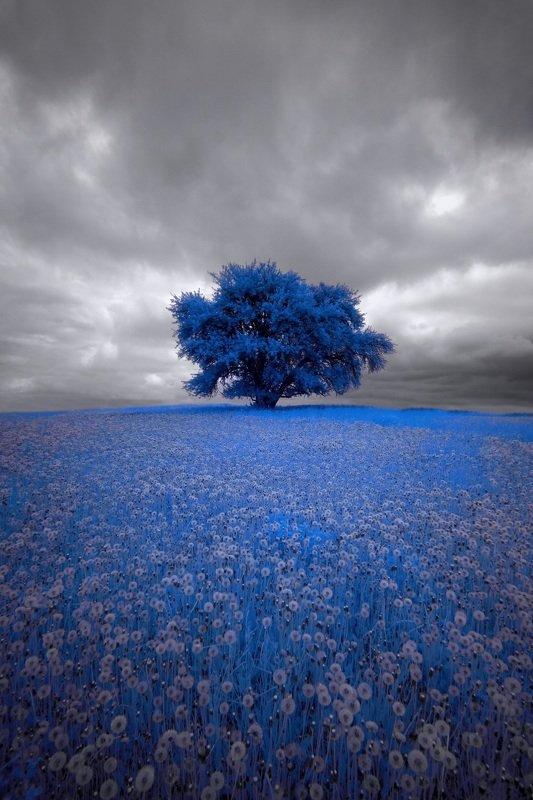 infrared,ик-фото,инфракрасное фото, инфракрасная фотография, пейзаж, весна Пасмурный день одуванчиков 2.photo preview