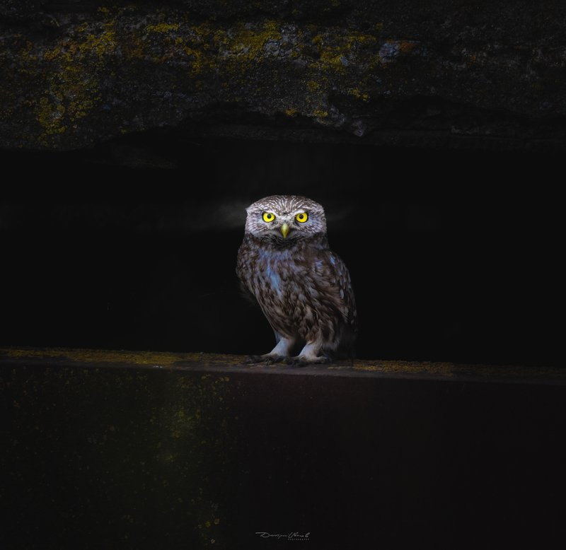 птицы, сова, сыч, природа, wildlife, birds, owl Most of all I like those creatures for there eyesphoto preview
