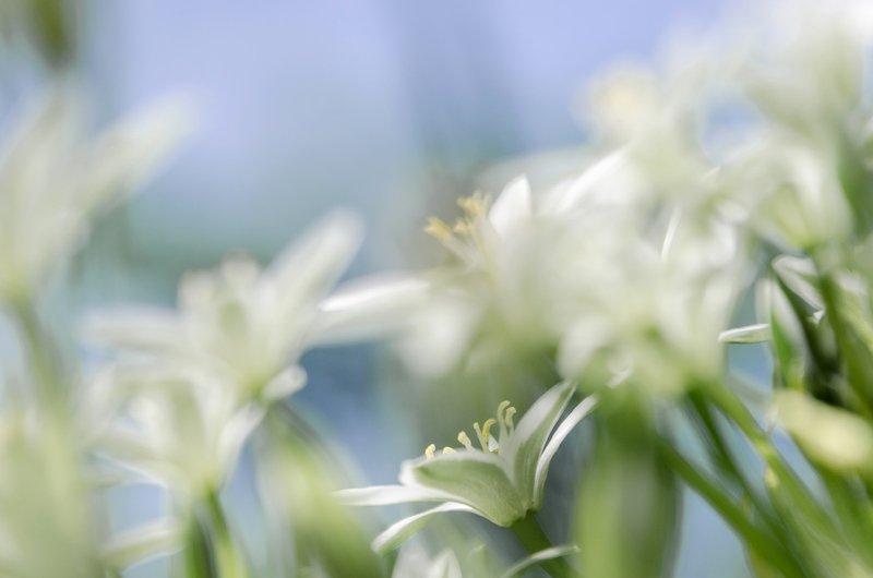 лето, белые, цветы, россия Лето пришло...photo preview