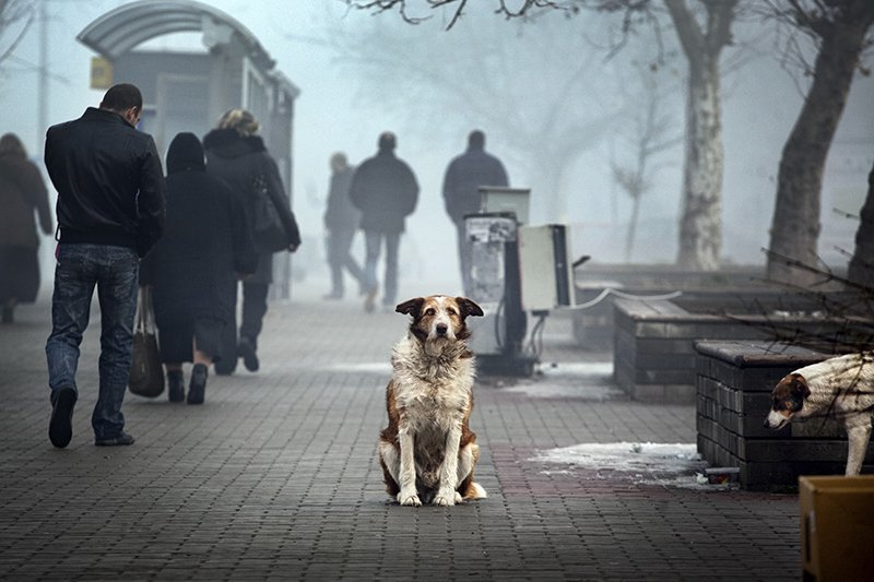 composition, moment, photography, анализ, композиция, собака Dog\'s Lifephoto preview