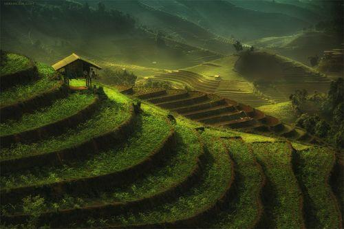 Rice terraces *