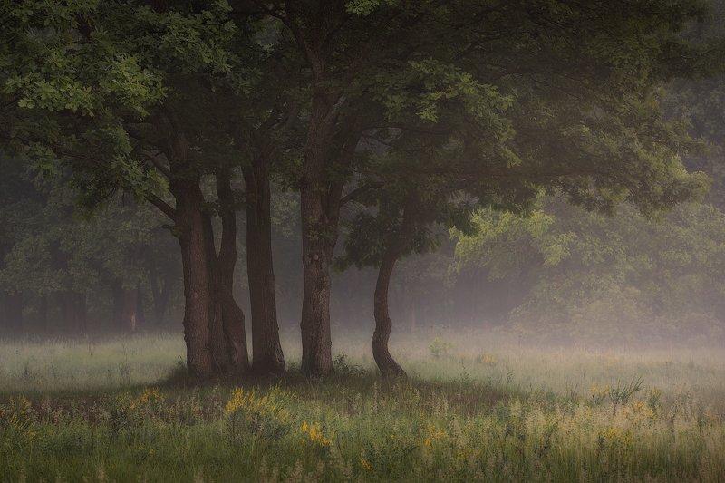 природа утро солнце туман деревья Июнь. Начало.photo preview