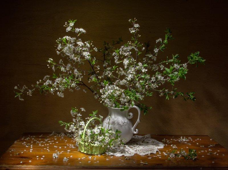 натюрморт, вишня, вишня цветет Нежность мая...или снегопад весны...photo preview
