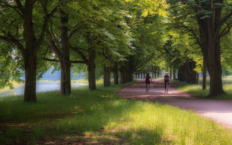 парк, дорожка, аллея, прогулка, пара, велосипед Приятная прогулкаphoto preview
