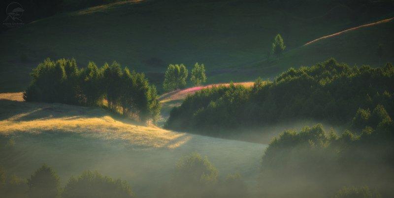 пейзаж, природа, холм, туман, россия Летнее утро фото превью