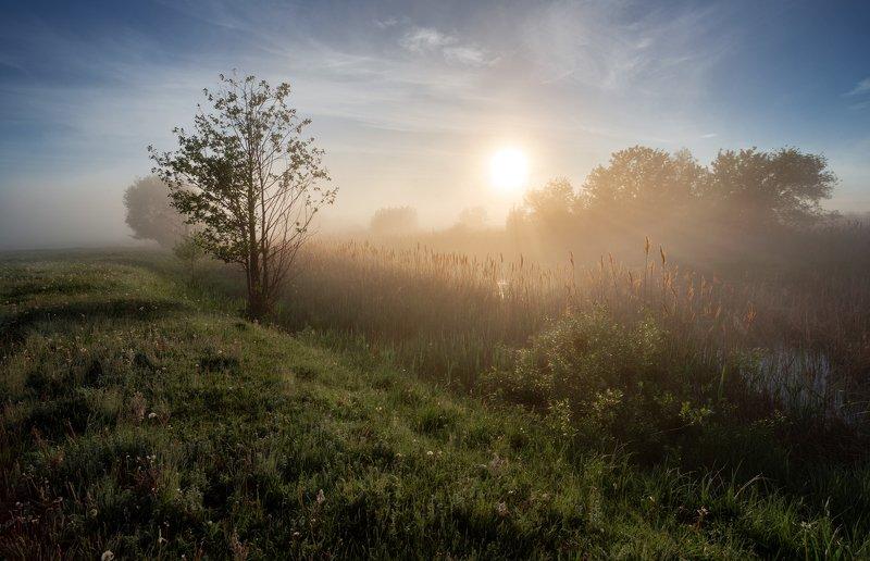 Утренние лучи мая!photo preview