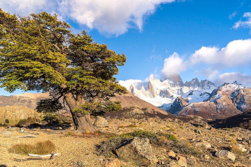 пейзаж, природа, Патагония, Аргентина, гора ,Фицрой Утро в Патагонии, Аргентина, гора Фицройphoto preview