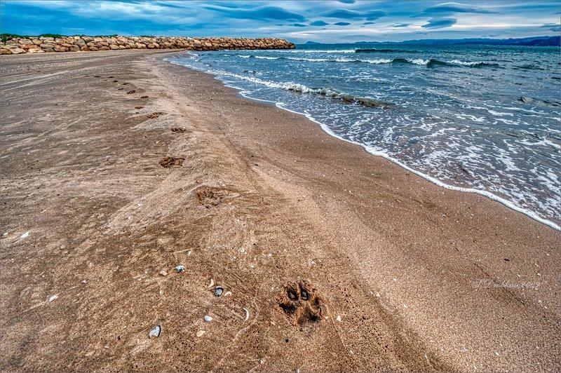 море, пейзаж, волны, вода, небо, облака, пляж Прогулка чёрного псаphoto preview