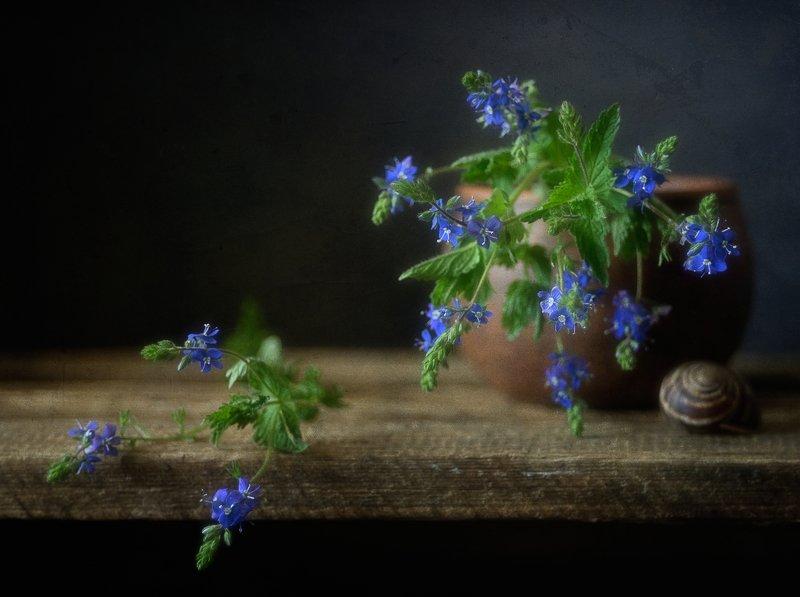 натюрморт,вероника,цветы вероника дубравная...photo preview