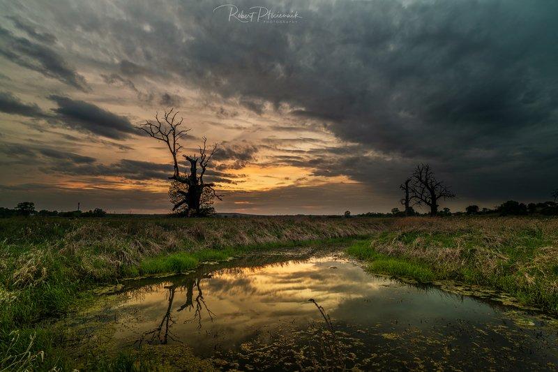 Rogaliński Park Krajobrazowyphoto preview