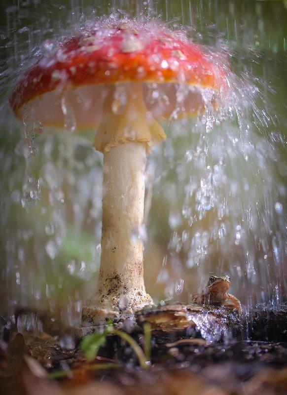 С понтом под зонтом фото превью