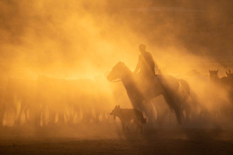 Rider фото превью