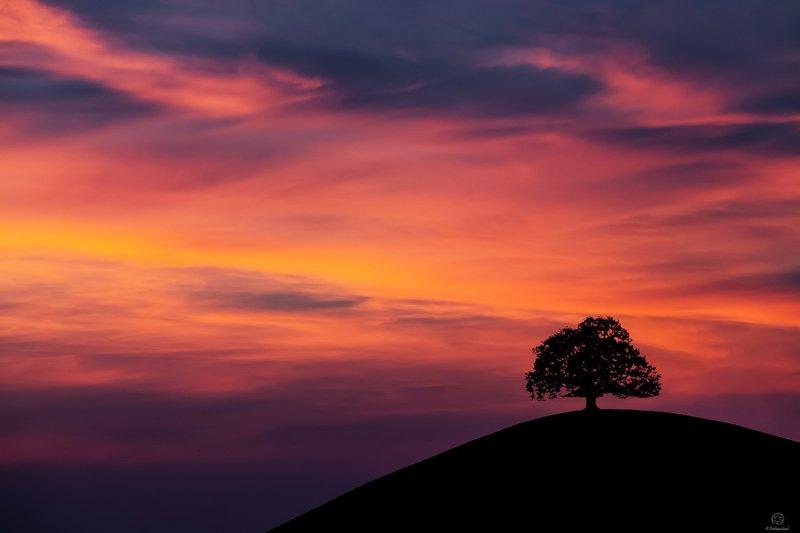 закат, дерево, жизнь, земля, природа Древо жизни  / Switzerlandphoto preview