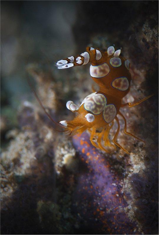 филиппины, негрос, sexy shrimp весенний танцорphoto preview