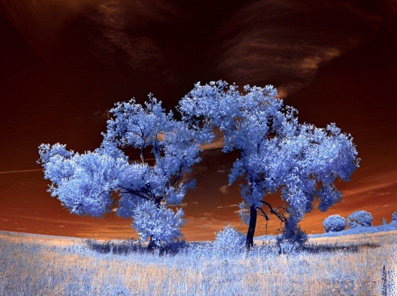 infrared,ик-фото,инфракрасное фото, инфракрасная фотография, пейзаж, лето Нет симметрии.photo preview