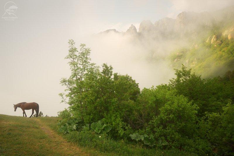 крым лес туман лошадь Где ты? фото превью