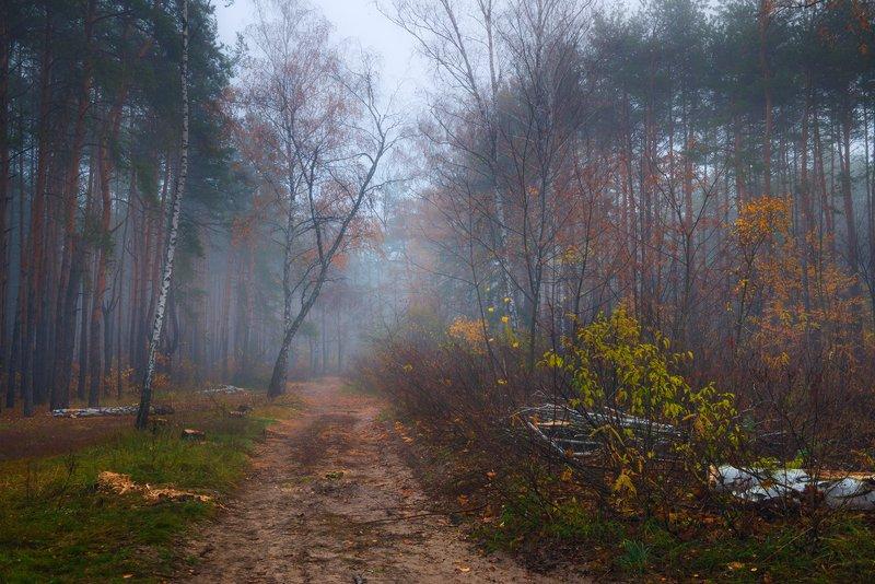 лес, осень, ноябрь, туман Сырая тоскаphoto preview