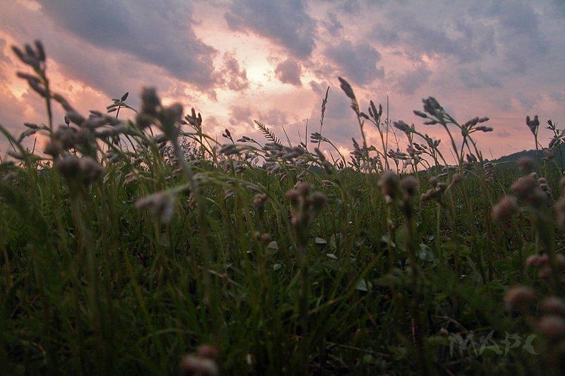 пейзаж закат поле июнь Вечерphoto preview