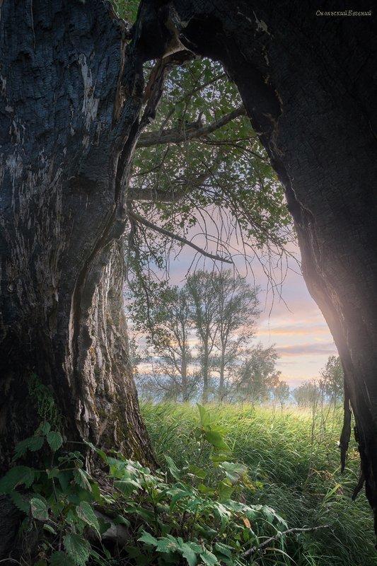 лето, закат, поле, тополь, поляна, ствол Три тополяphoto preview
