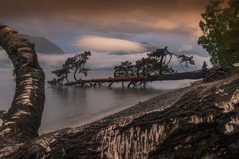 алтай, сибирь, телецкое озеро, Fallenphoto preview