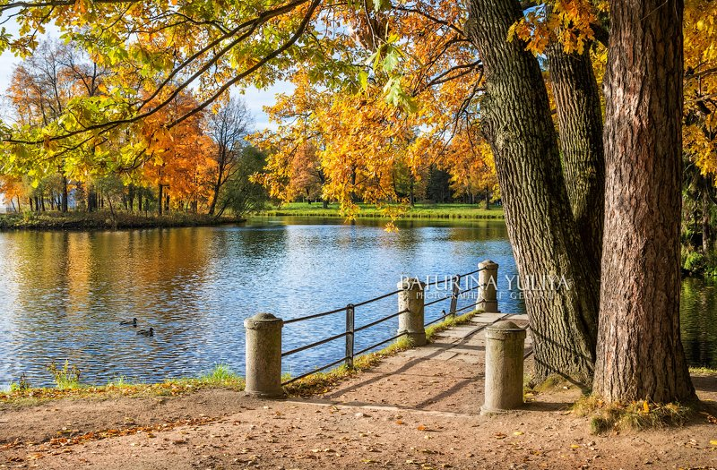 царское село, пейзаж, осень, пруд Утки в прудуphoto preview