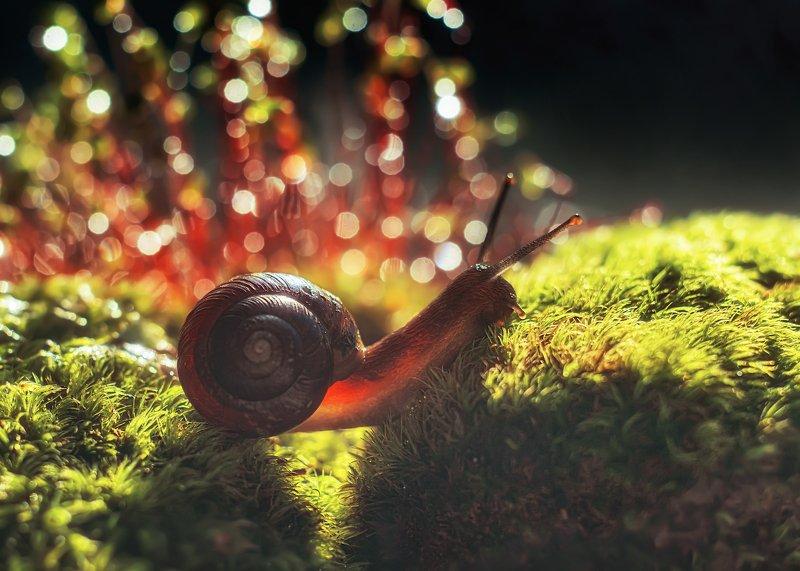 Волшебный мир маленькой улиточкиphoto preview