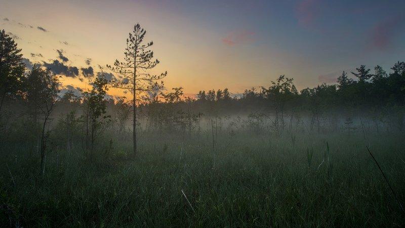 болото, туман, сумерки Густой туманphoto preview