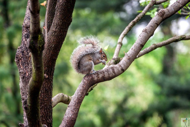 Squirrel in the parkphoto preview