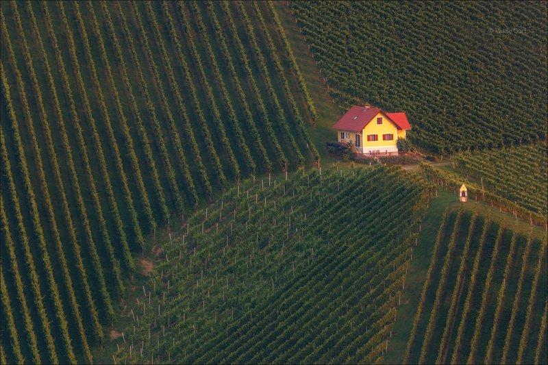 свет,österreich,лето,штирия,домик,австрия,виноградники,gamlitz,sernau,landscape Виноградная геометрия фото превью