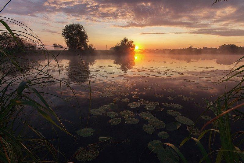 алексей платонов брянск, пейзаж, утро, озеро, туман, оз. пантон В тишине летнего утраphoto preview
